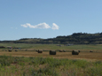 IRRIGATED FARM LAND / BRIDGER AREA