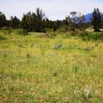 10 ACRES, NYE AREA, PRIVATE RIVER ACCESS